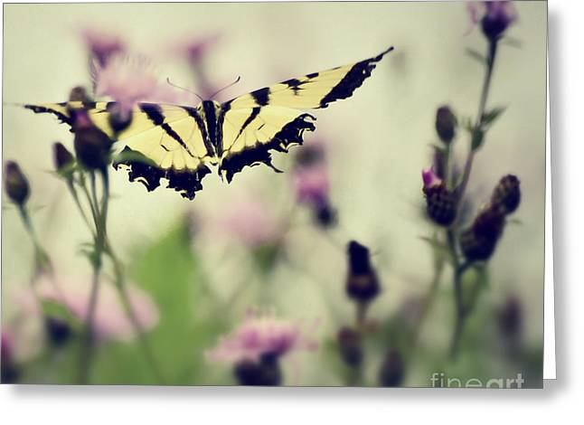 Greeting Card featuring the photograph Beauty And Grace  by Kerri Farley
