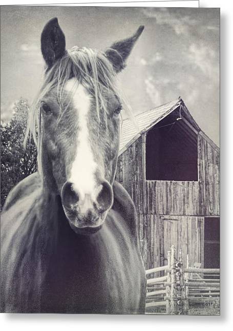 Beauty And The Barn Greeting Card by Barbara Hymer