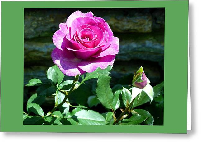 Greeting Card featuring the photograph Beauty And The Bud by Will Borden