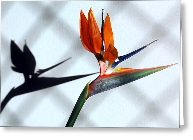 Beauty And The Shadow Greeting Card by Terence Davis