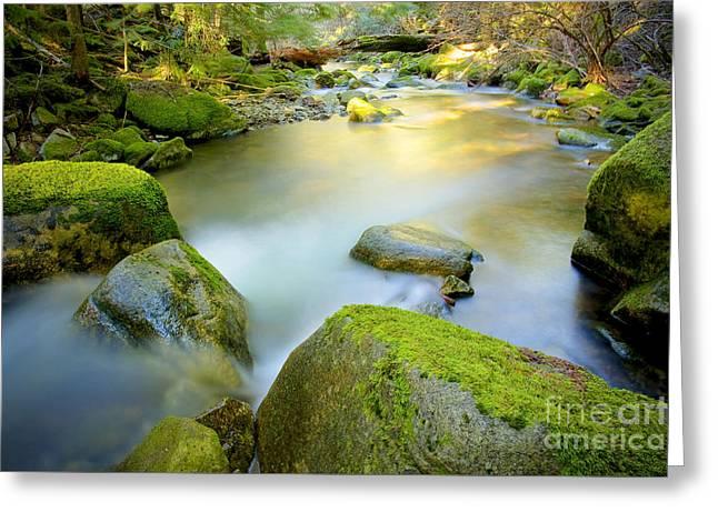 Beauty Creek Greeting Card by Idaho Scenic Images Linda Lantzy