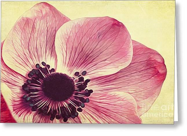 Beauty II Greeting Card by Angela Doelling AD DESIGN Photo and PhotoArt