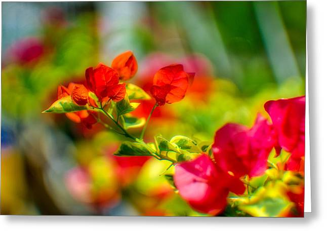 Beauty In A Blur Greeting Card