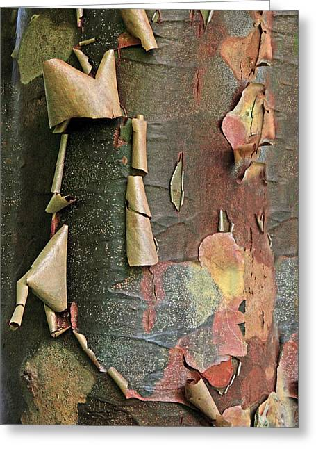 Beauty In Bark Greeting Card by Jessica Jenney