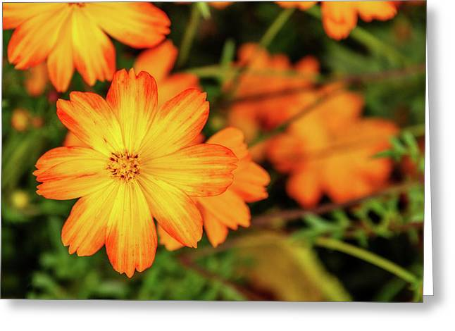 Beauty In Boggs Tract Greeting Card by Terry Davis