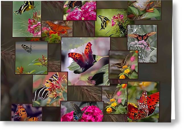 Beauty In Butterflies Greeting Card