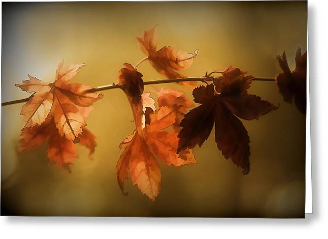 Beauty In The Autumn  Greeting Card by Terry Davis