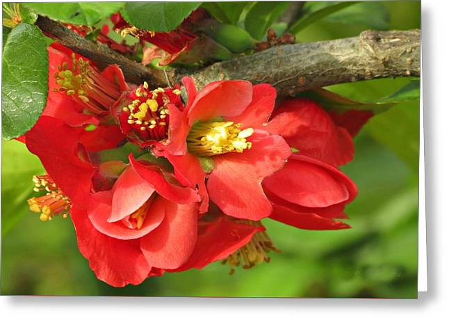 Beauty In The Branche Greeting Card