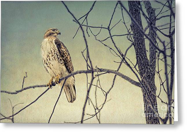 Red-tailed Hawk On Watch Greeting Card
