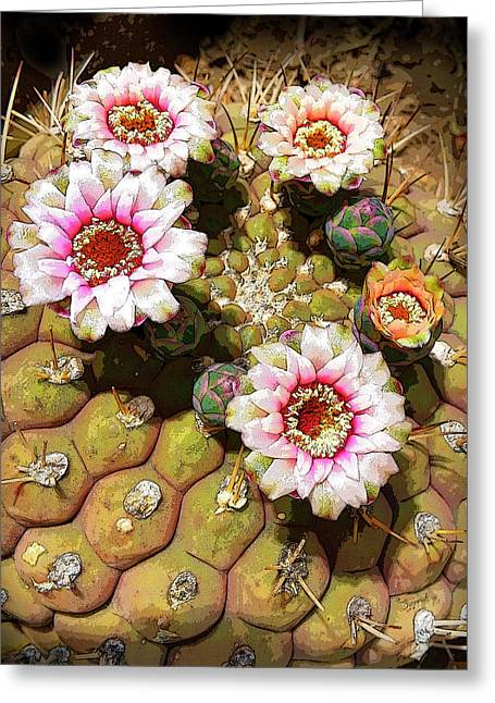 Beauty In The Desert Greeting Card