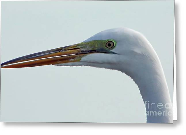 Beauty In The Great Egret Greeting Card by D Hackett