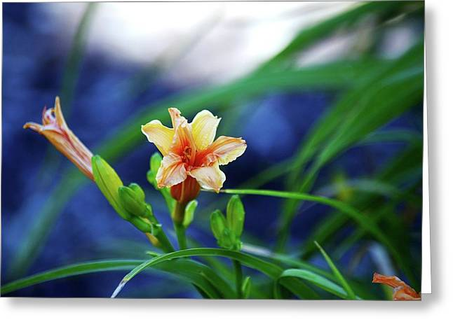 Beauty In The Lillies Greeting Card