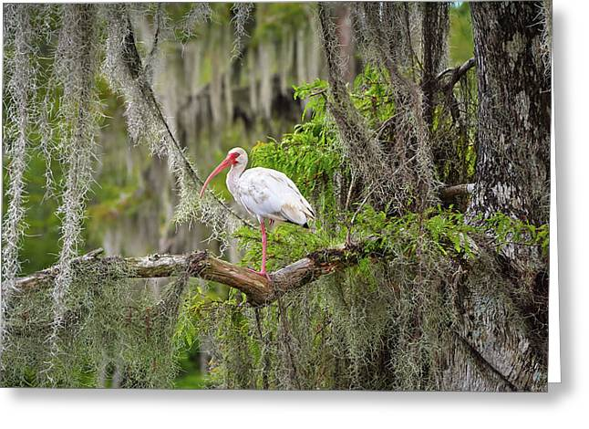 Beauty In The Moss Greeting Card by Bill Chambers