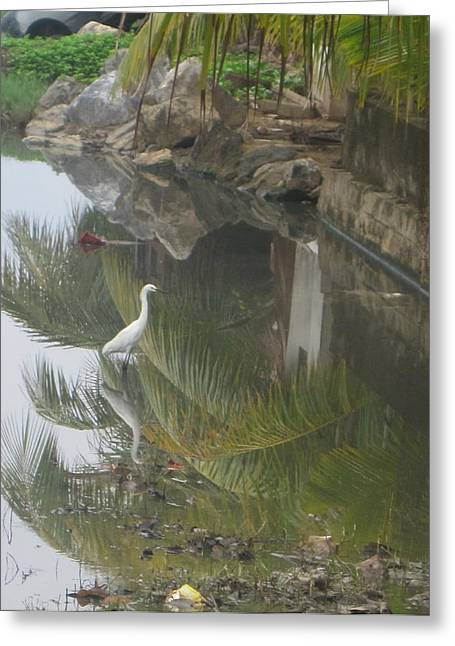Beauty In The Swamp Greeting Card by Michael Litvack