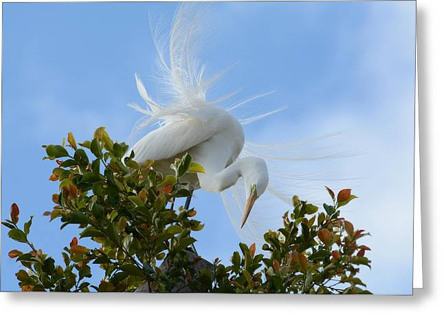Greeting Card featuring the photograph Beauty In The Treetop by Fraida Gutovich
