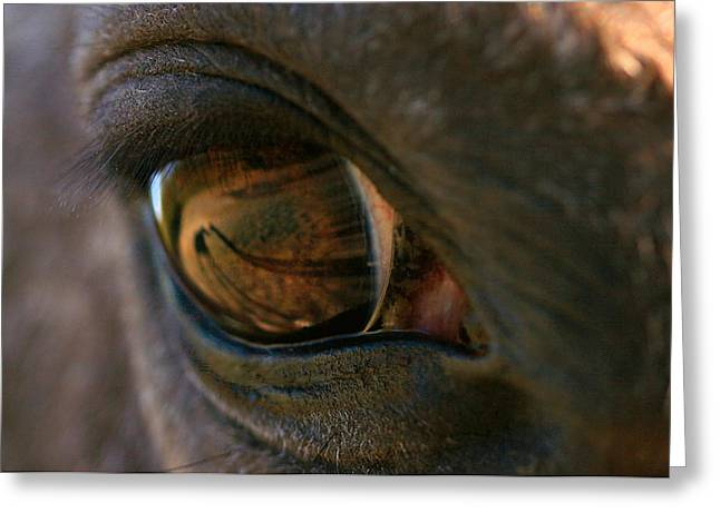 Beauty Is In the Eye of the Beholder Greeting Card by Angela Rath