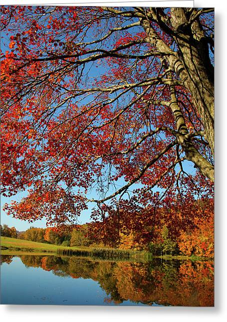 Greeting Card featuring the photograph Beauty Of Fall by Karol Livote