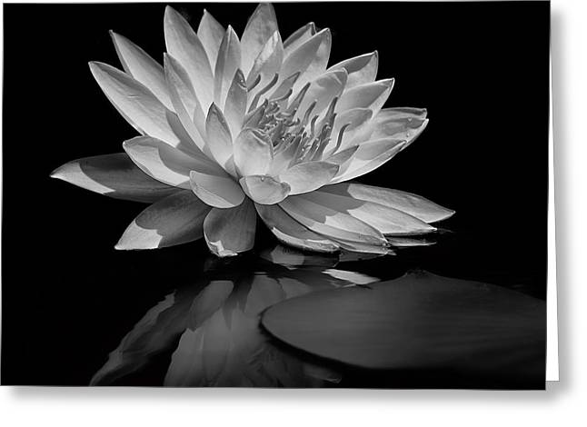Beauty Of The Pond Greeting Card