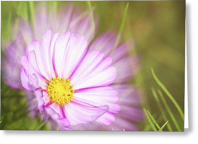 Beauty Of The Summer Morning Greeting Card