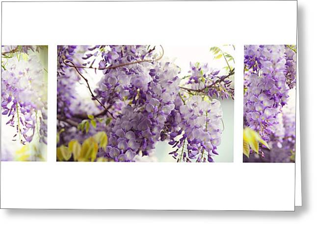 Beauty Of Wisteria. White. Triptych Greeting Card