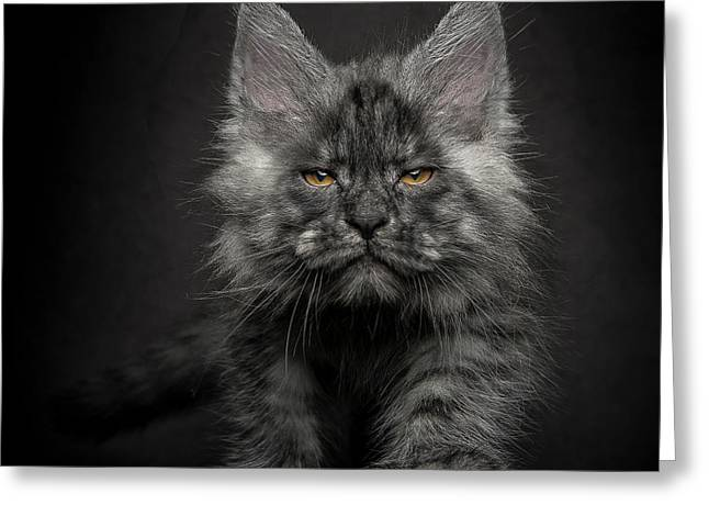 Greeting Card featuring the photograph Beauty Or Beast by Robert Sijka