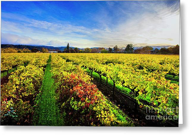 Beauty Over The Vineyard Greeting Card by Jon Neidert