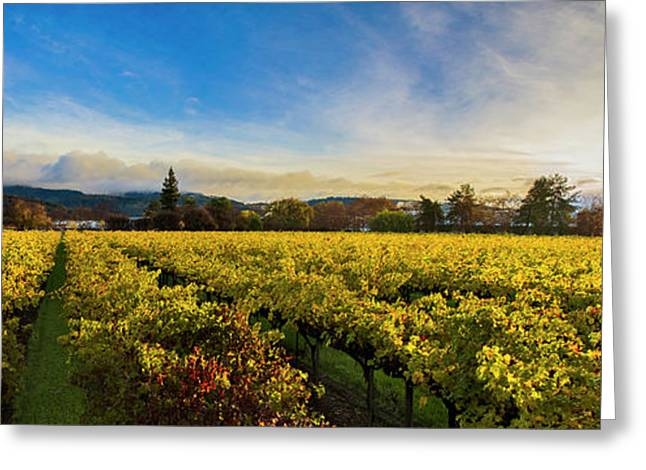 Beauty Over The Vineyard Panoramic Greeting Card