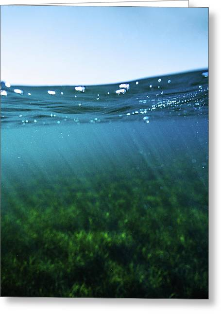 Beauty Under The Water Greeting Card