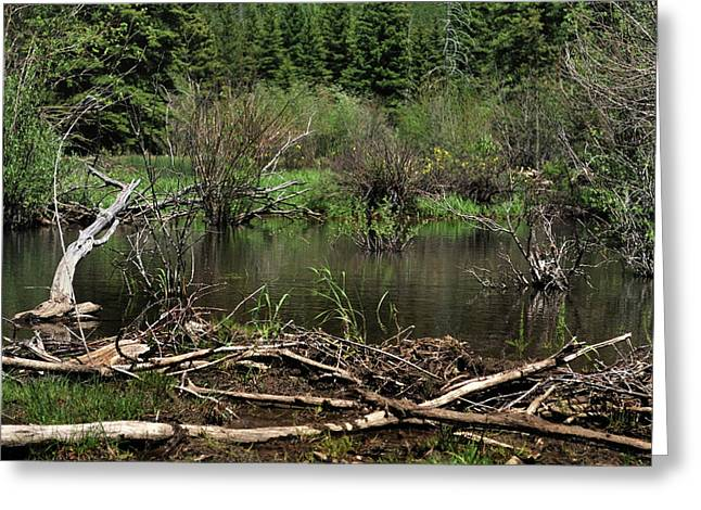 Greeting Card featuring the photograph Beaver Pond by Ron Cline