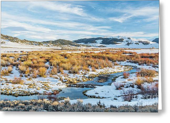 beaver swamp in Rocky Mountains Greeting Card