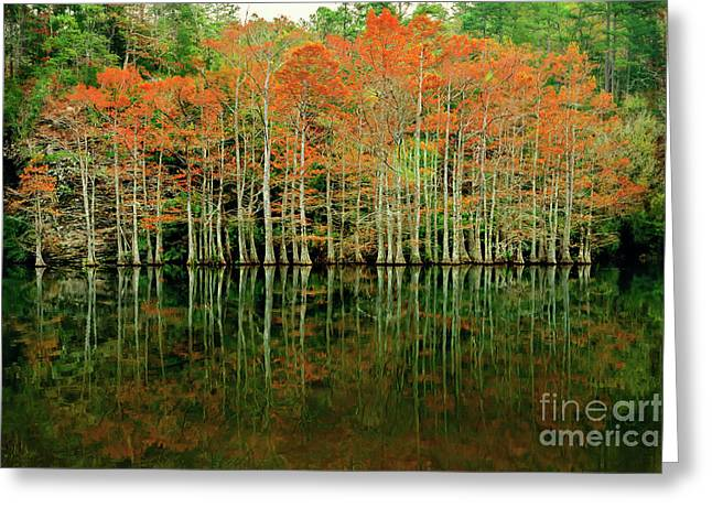 Beaver's Bend Cypress All In A Row Greeting Card
