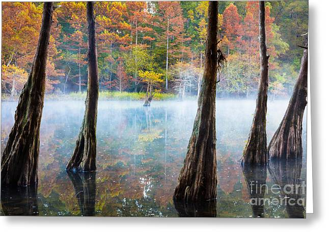 Beavers Bend Cypress Grove Greeting Card by Inge Johnsson
