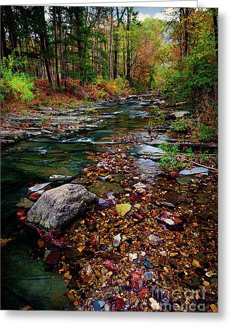 Beaver's Bend Tiny Stream Vertical Greeting Card by Tamyra Ayles