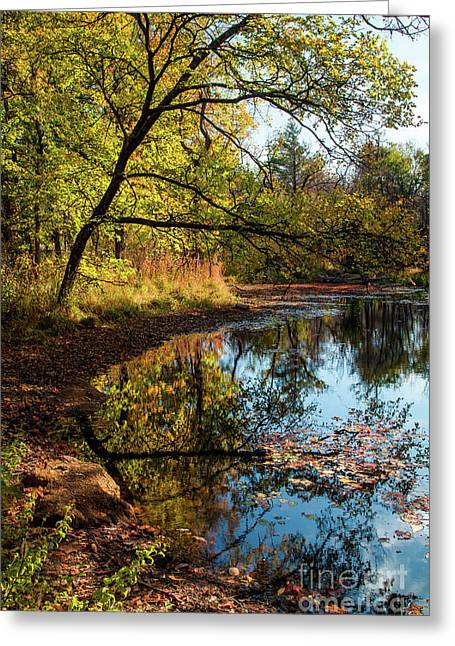 Greeting Card featuring the photograph Beaver's Pond by Iris Greenwell