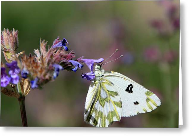 Becker's White Greeting Card by Donna Kennedy