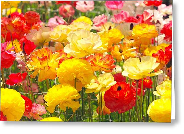 Bed Of Flowers Greeting Card