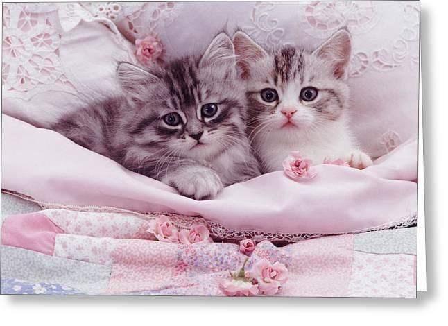 Bedtime Kitties Greeting Card
