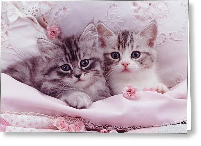 Bedtime Kitties Greeting Card