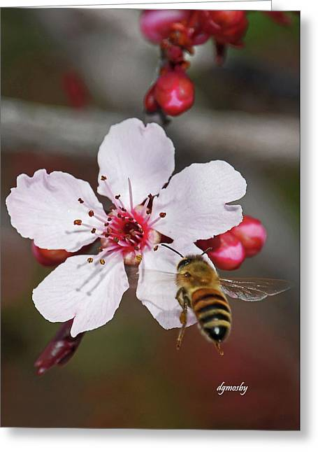 Bee And Blossom 9592 Greeting Card by David Mosby