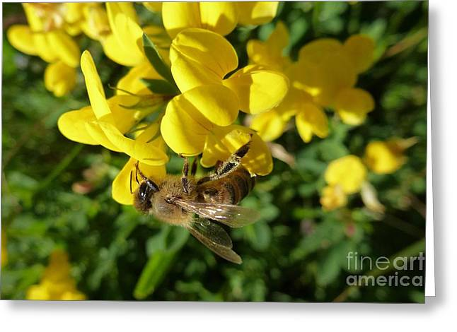 Bee And Broom In Bloom Greeting Card