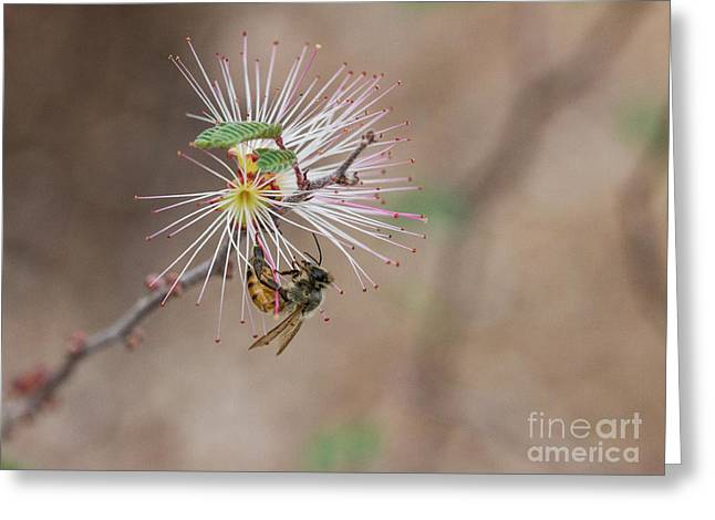 Bee And Fairy Duster Greeting Card