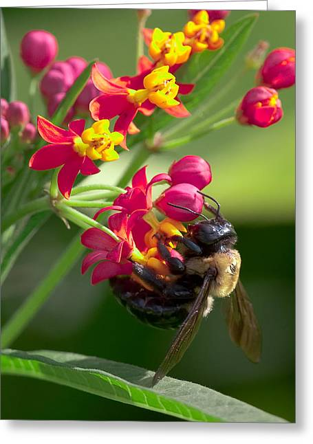 Bee And Flowers Greeting Card by E Mac MacKay