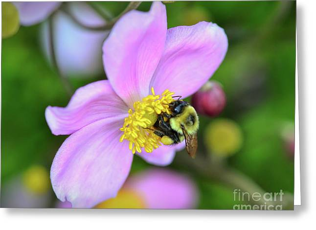 Greeting Card featuring the photograph Bee And Japanese Anemone by Kerri Farley