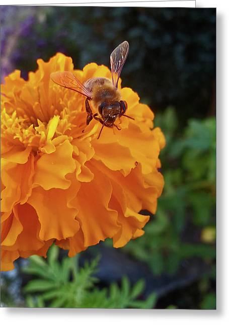 Bee And Marigold Greeting Card