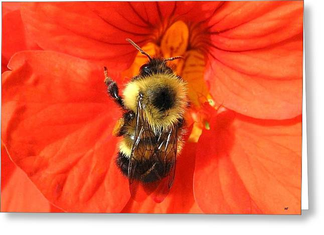 Bee And Nasturtium Greeting Card by Will Borden
