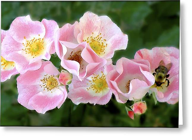 Bee And Roses Greeting Card