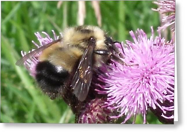 Bee Greeting Card by Angela Christine