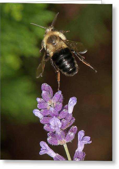Bee Ballet Greeting Card