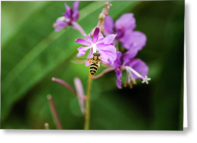 Bee Cause It's Fireweed Greeting Card