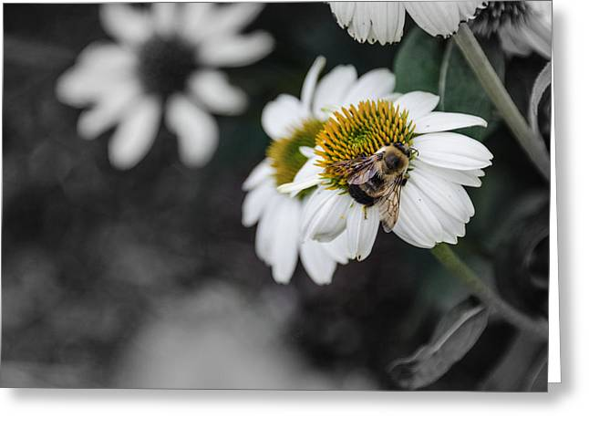 Bee Daisied Greeting Card